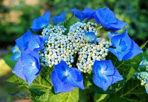 7 diferentes tipos de plantas acidófilas