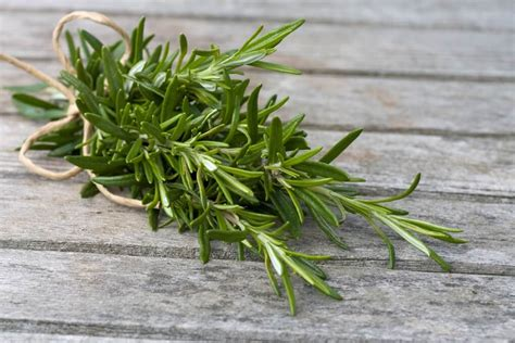7 hierbas aromáticas que fácilmente puedes cultivar en tu ...