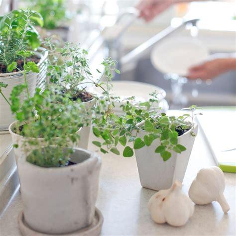 7 Ideas para crear un Huerto de Aromáticas en tu Cocina