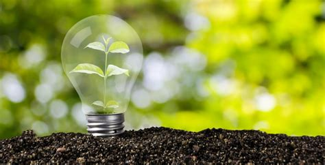 7 ideas para cuidar el medio ambiente en tu vida diaria