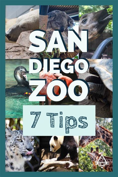 7 Tips for a Sensational Day at the San Diego Zoo | Visit ...