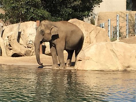7 Tips to Maximize your Fun at the San Diego Zoo