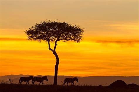 72 Fotos de Kenia