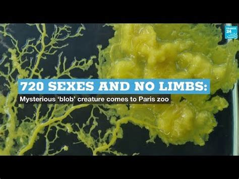 720 sexes and no limbs: Mysterious 'blob' creature comes ...