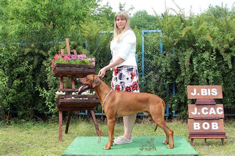 8 9.06.2019 выставка собак всех пород   Kiswahili Ridgeback