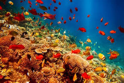 8 animales marinos más raros del mundo — Mis animales