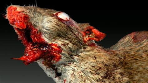 8 ANIMALES ZOMBIES Reales   YouTube