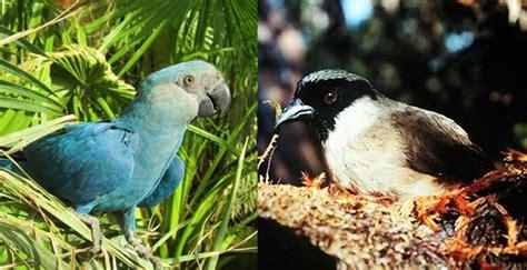 8 especies de aves extintas   National Geographic en Español