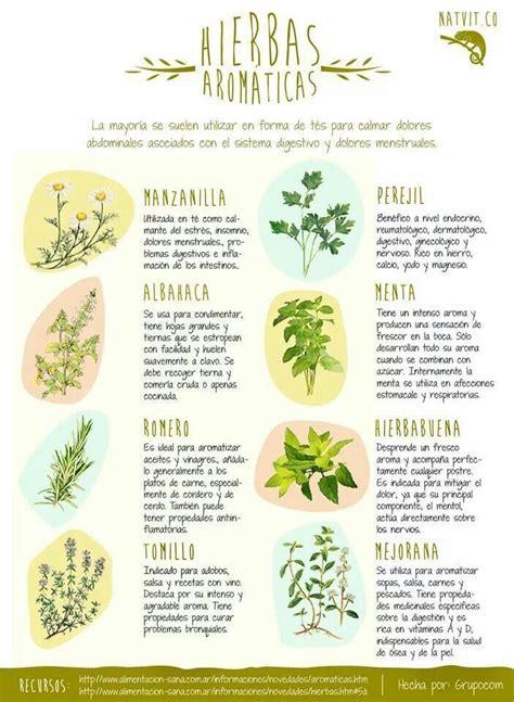 8 hierbas aromáticas con propiedades medicinales ...