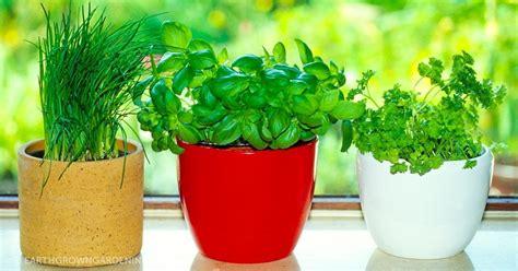 8 Hierbas aromáticas que son fáciles de plantar en casa