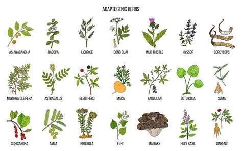 8 plantas adaptógenas para equilibrar nuestro oganismo