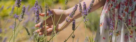 8 plantas aromáticas que puedes elegir para tu jardín ...