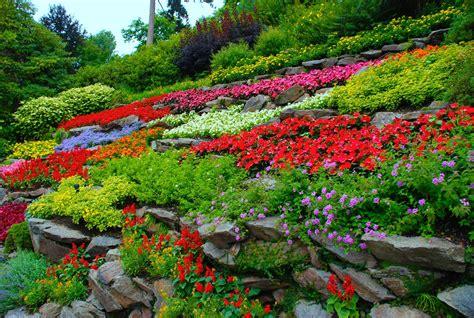 8 plantas de exterior con flor y sus cuidados básicos