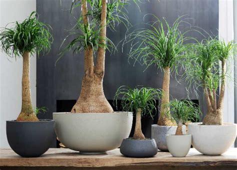 8 Plantas de ornato para interiores y exteriores de tu casa