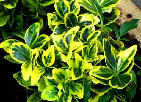 8 Plantas para Jardim Resistentes ao Sol | Blog Playgrama