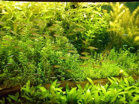 8 plantas tapizantes para acuario y sus cuidados básicos ...