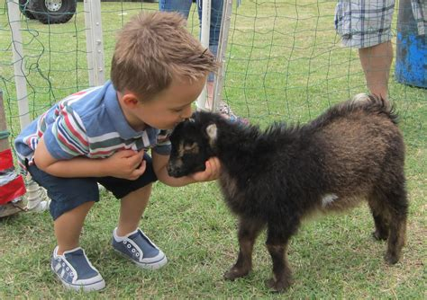 8 sick: Minnesota preliminary test results of petting zoo ...