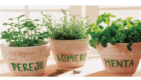 8 Tipos + 11 Cuidados A Considerar En El Cultivo De Las ...
