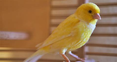 8 Top Lesser Known Pet Bird Species   UFD