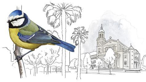 83 espècies d aus nien a Barcelona