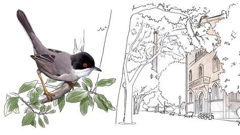 83 especies de aves anidan en Barcelona