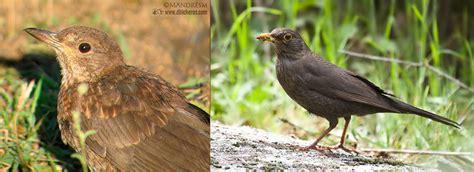 9 aves básicas urbanas con las que empezar a aprender ...