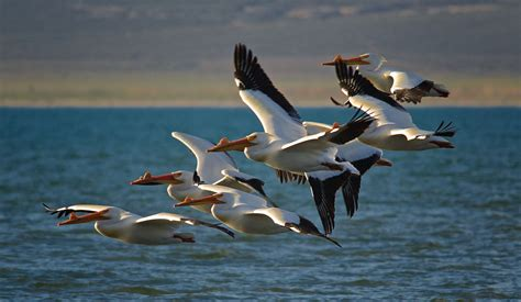 9 migratory birds the government allows to be killed | Reveal