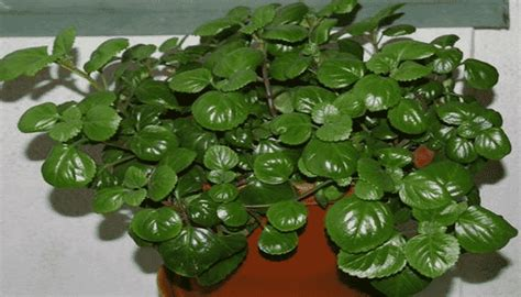 9 Plantas De Interior Resistentes Para Integrar Un ...