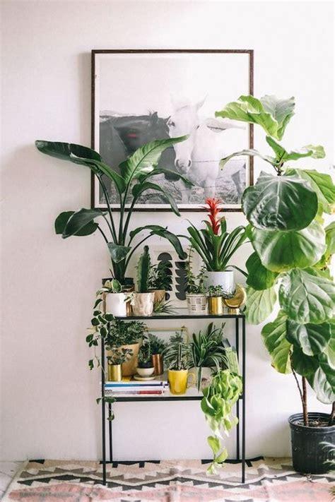 9 plantas muito fáceis de cuidar   Casa Vogue | Paisagismo