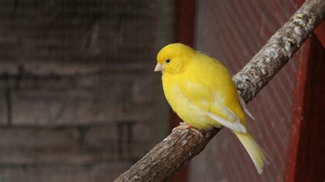 A Closer Look at Canaries