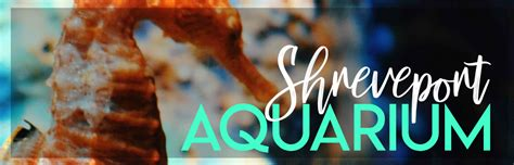 A Day at the New Shreveport Aquarium • Endless Bliss