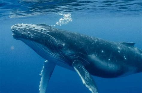 A Giant Blue Whale was Spotted in the Red Sea for the ...