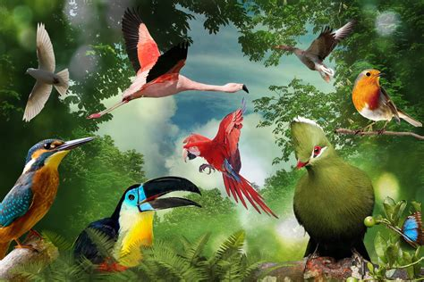 A group of birds #wallpapers   HD Wallpapers