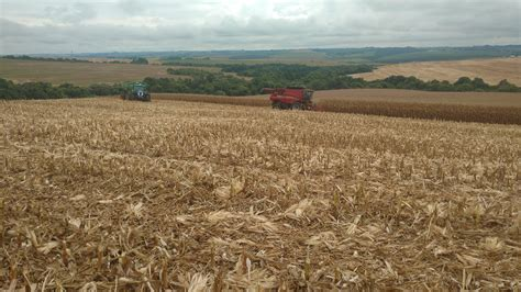 A moderna indústria rural – Gislene Bastos