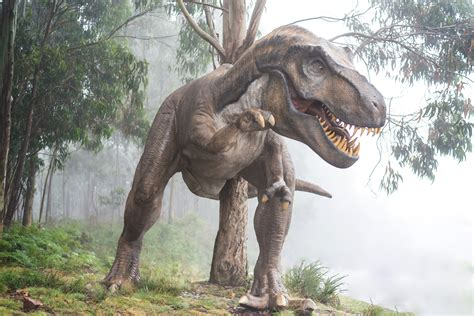 A New Dinosaur Species Has Been Found in South Africa ...