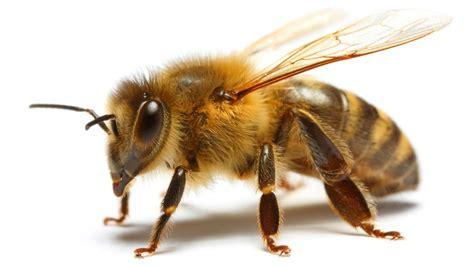 A sembrar para proteger las abejas – Día del Sur Noticias