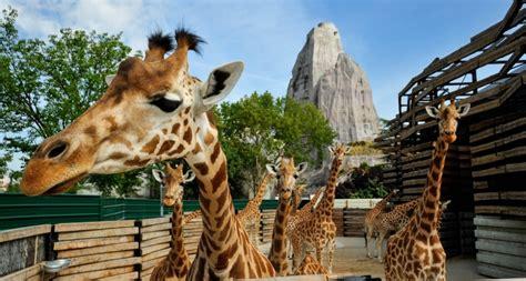 A weekend at Paris zoo   Weekend in France