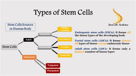 About StemCells