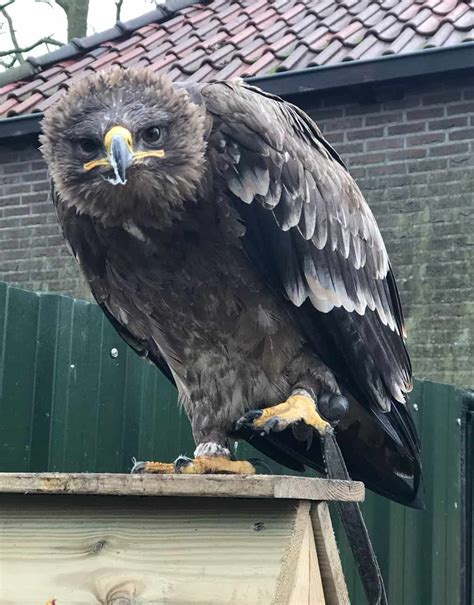 About the Birds – One World Raptor Conservancy