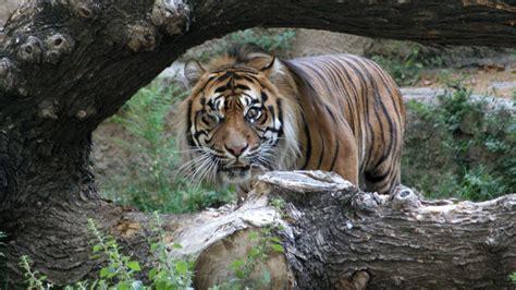 ¿Acabará cerrando el zoo de Barcelona?