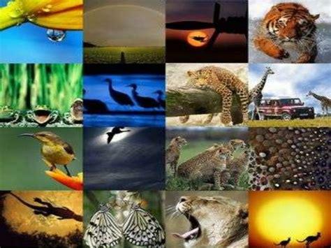 Acogerá Ecuador encuentro sobre fauna silvestre en América ...