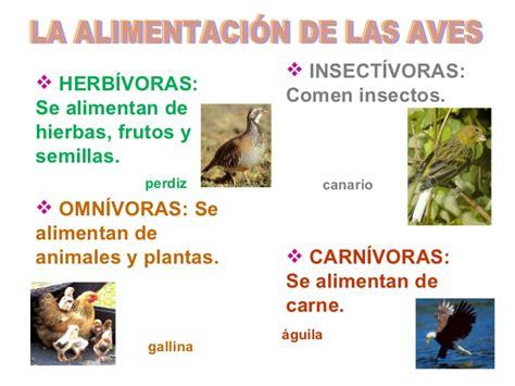 Actividades vertebrados