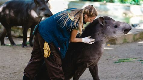 Actividades | Zoo Barcelona