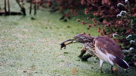 Actualizan la Lista de las aves de España