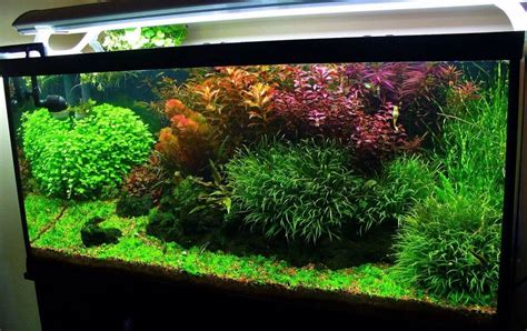 Acuario plantado | Akwarium