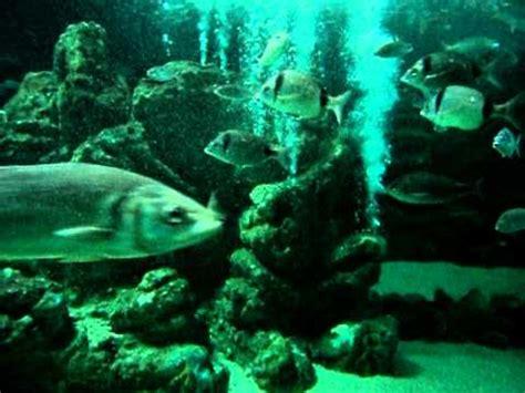 Acuario Zoomarine Portugal II  Tiburón y peces .AVI   YouTube