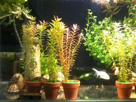 Acuarios Decorpez: Plantas para pecera