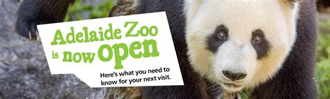 Adelaide Zoo   Australian Panda Home