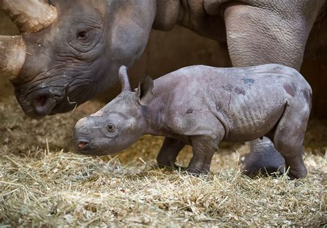 Advanced technology helps Pittsburgh Zoo staff monitor ...