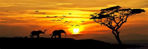Africa Holidays 2017/2018   Luxury & Tailor Made with ...